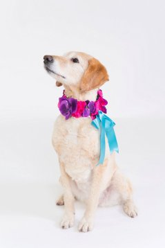 weddingdog